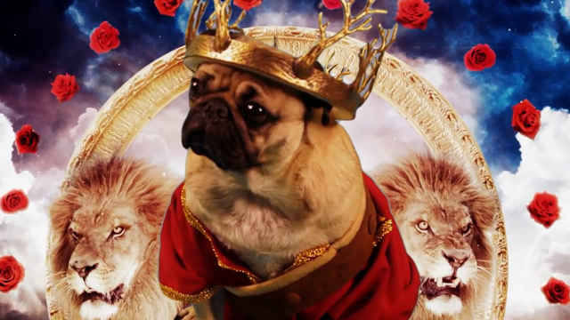 Irresistible(Starring Doug The Pug) 1080P — Fall Out Boy & Demi Lovato